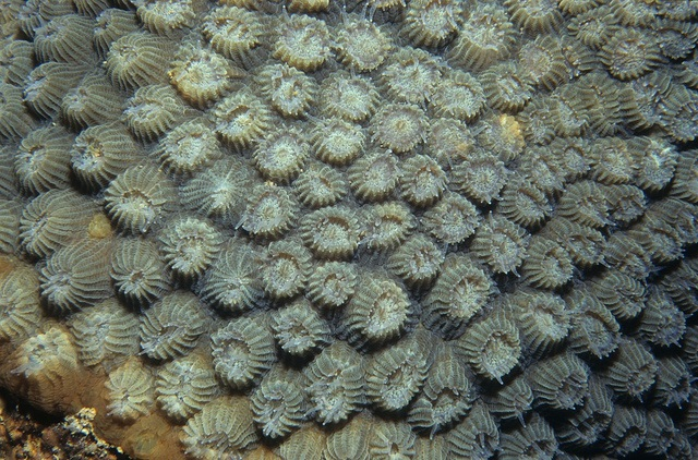 Coral polyps out at night