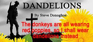 dandelions_315